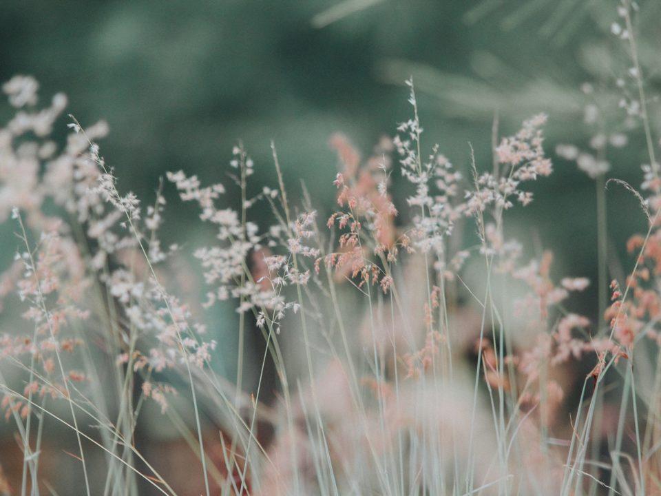 vihreä tausta ja valkokellertäviä kukkia ja heiniä