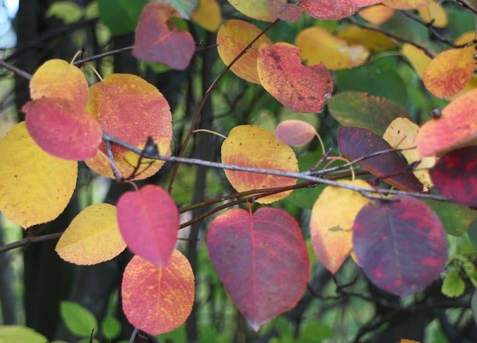 syksy värikkäitä lehtiä