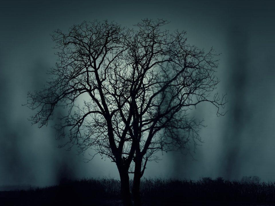 siniharmaa taivas musta puu