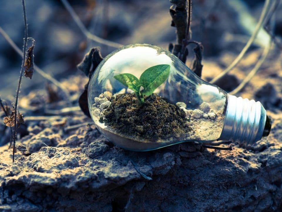 maa hehkulamppu taimi kasvu