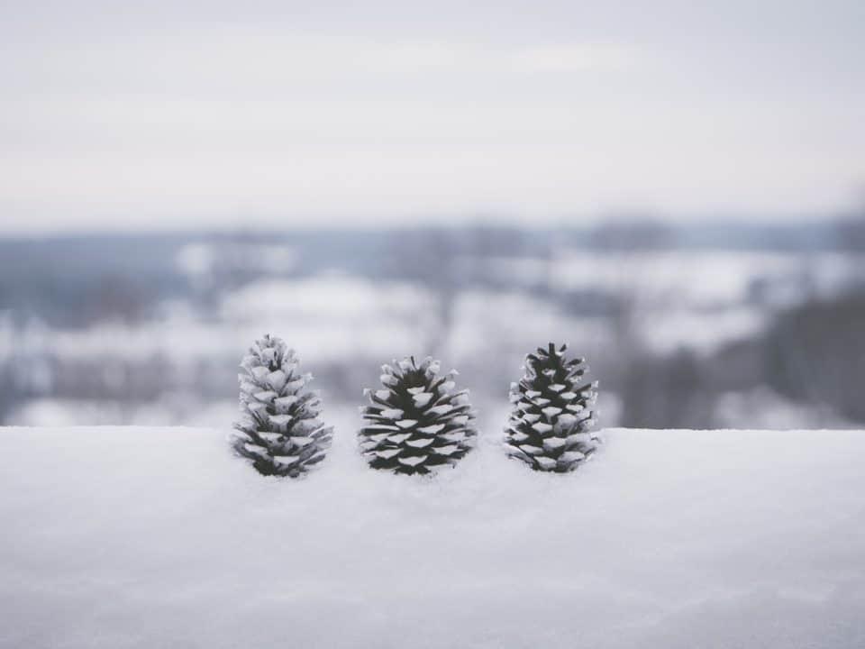 kolme käpyä lumimaisemassa