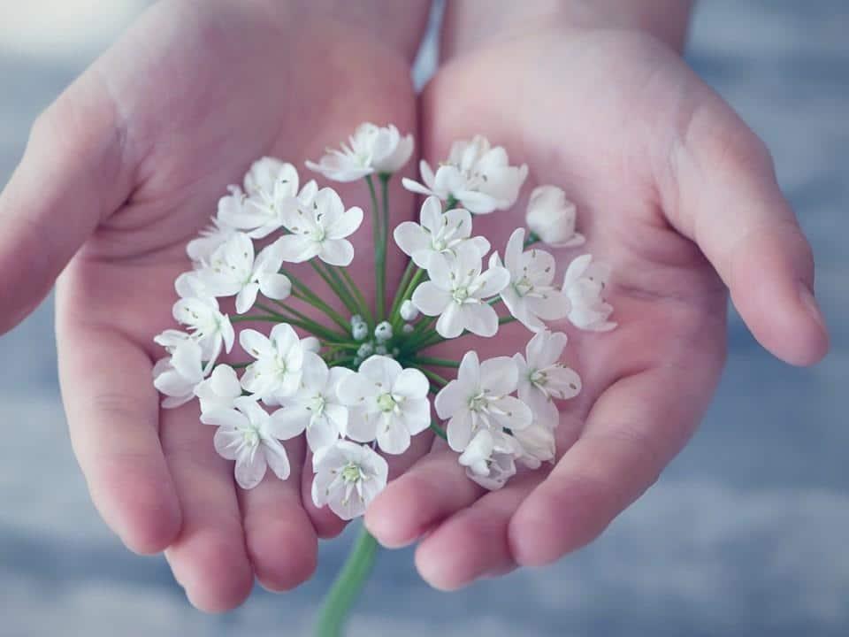 valkoisia kukkia kahdella kämmenellä
